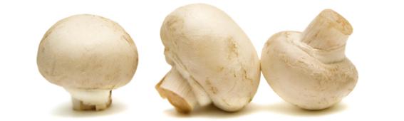 Champignons Liersch Obst, Gemüse- und Kartoffelgroßhandel Frischezentrum Essen